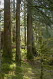 The forest at Fort Abercrombie State Historical Park - 225104706