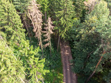 green forest aerial top view. sand road among trees in countryside