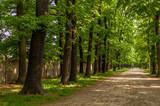 Leśny krajobraz w mieście, Wrocław