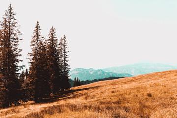 Berglandschaft im Herbst
