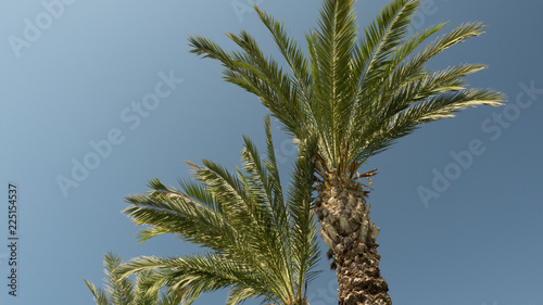 Foto Murales unter Palmen