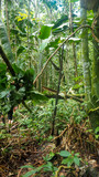 trees and plants at the amazon rainforest in colombia
