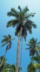 palm trees on a sunny blue sky