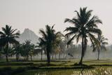 rice field - 225167773