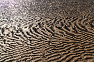 Sand rippled textured pattern created by low tide. Abstract background