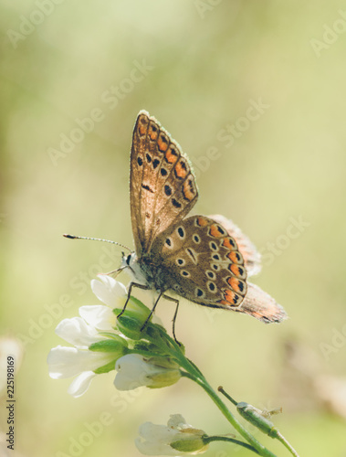 Leinwanddruck Bild Butterfly and autumnal flower of the field. Sunny card