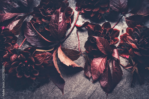 Dark red dahlias bloom layout. Autumn dahlias flowers with fall leaves background, top view, flat lay