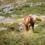 Stunning image of wild pony in Snowdonia landscape in Autumn - 225221154