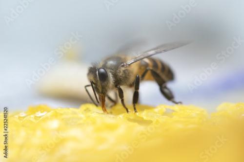 Honey Bees on beehive. - 225241520