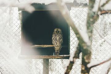 wild owl in snow forest
