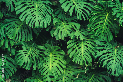 monstera-philodendron-leaves-plant-pattern