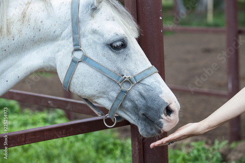 Horse And The Woman's Hand