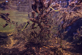 underwater texture of water in a lake / underwater photo freshwater ecosystem, water texture background - 225302960