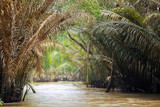 River flowing in the jungle - 225304385