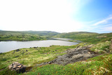 landscape tundra / summer landscape in the north tundra, moss, ecosystem - 225304547