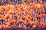 autumn forest landscape / yellow forest, trees and leaves October landscape in the park - 225306552