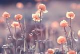 vintage background little flowers, nature beautiful, toning design spring nature, sun plants - 225309944