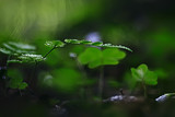spring greens background, abstract blurred nature beautiful pictures, green shoots - 225310791
