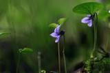 summer background flowers nature / beautiful picture design background flowers in the field - 225310793
