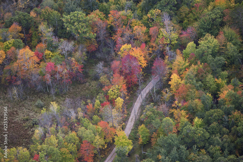 Foto Murales Aerial view of curving road and trees in autumn color in northern Minnesota