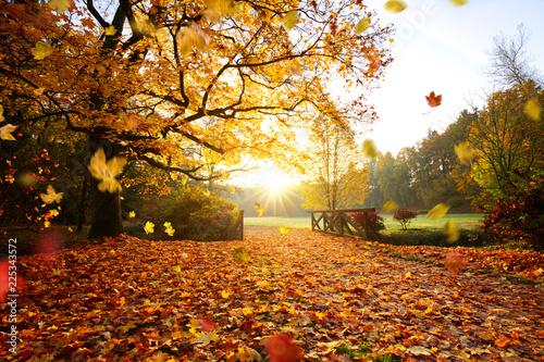 Leinwandbild Motiv Autumn forest. Beautiful rural scenery.