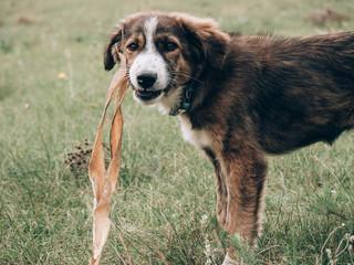 Cute young mixed breed dog outdoor © Laszlo