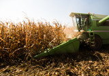 Harvesting of corn field with combine - 225354904
