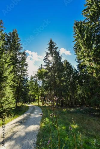 Waldweg im Fichtelgebirge Wald Freizeit Wandern