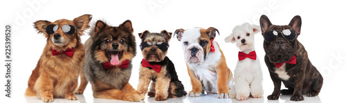 Foto Murales group of six adorable dogs of different breeds wearing bowties