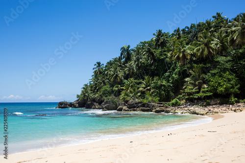 Fototapeten Strand Spiaggia tropicale con foresta