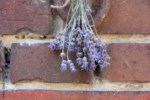 Lavendel trifft auf Backstein