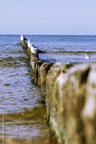 Mewy na drewnianym falochronie na seashore.