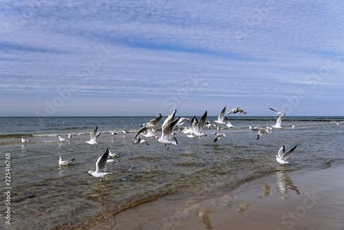 Mewy latające nad brzegiem morza.