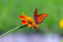 """Постер, картина, фотообои """"Viceroy butterfly on a flower"""""""