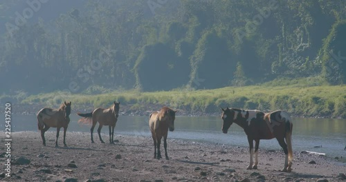 horses near a river in puerto rico