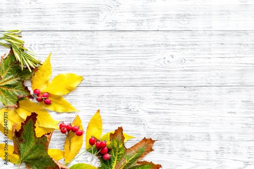 Makieta z jasne jesienne liście i jagody. Żółci i zieleni liście, czerwone jagody na białej drewnianej tło odgórnego widoku kopii przestrzeni