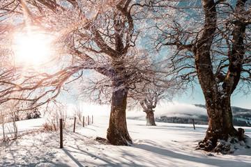 Verschneite Winterlandschaft und Sonnenschein im Schwarzwald