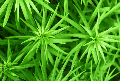 Green plant background - 225473544