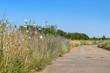 Wilde Blumen am Wegrand Renaturierung Naturschutz Kulturlandschaft
