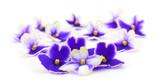Violets beautiful flowers. - 225491531