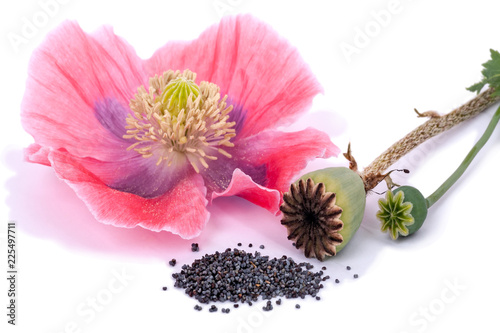 Three states of the plant poppy - 225497711