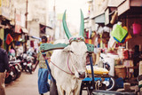 Udaipur, Rajasthan, India, January 31, 2018: Indian cow working on public street market - 225505936