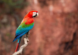 beautiful colorful macaw parrot sitting on a branch