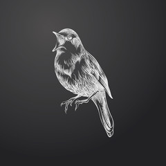 Hand Drawn Bird Sketch Symbol isolated on chalkboard. Vector  Element In Trendy Style