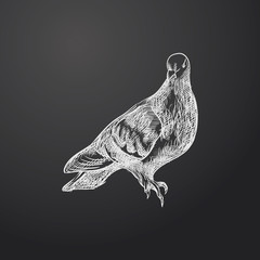 Hand Drawn Dove Sketch Symbol isolated on chalkboard. Vector  Element In Trendy Style