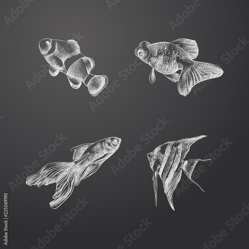 Hand Drawn Aquarium Fish Sketches Set Collection Of Fish And Other