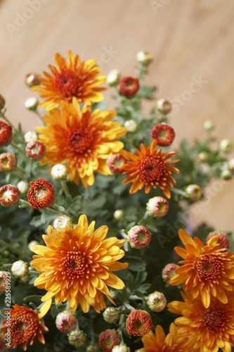 Beautiful bouquet of orange chrysanthemums (Chrysanthemum)