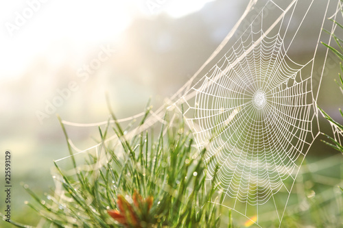 Leinwanddruck Bild Cobweb on wild meadow, closeup view