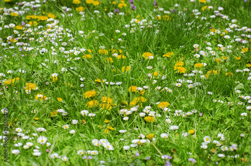Spring or Summer Flowers and Grass - 225596372