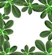 foliage border background - 225615354